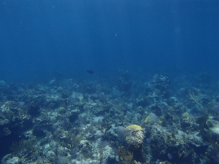 Nice Reef, not much fish...