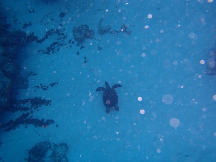 Turtles are like Cockroaches in Bahamas